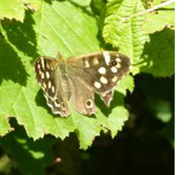 Butterflies of Watchet